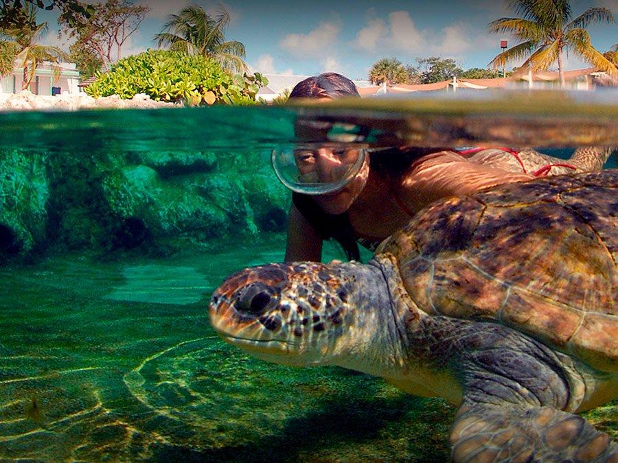 Grand Cayman, una joya Caribeña